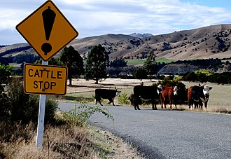 "Exclamation mark - New Zealand road sign warning of a ""cattle stop"" (cattle grid/cattle guard)"