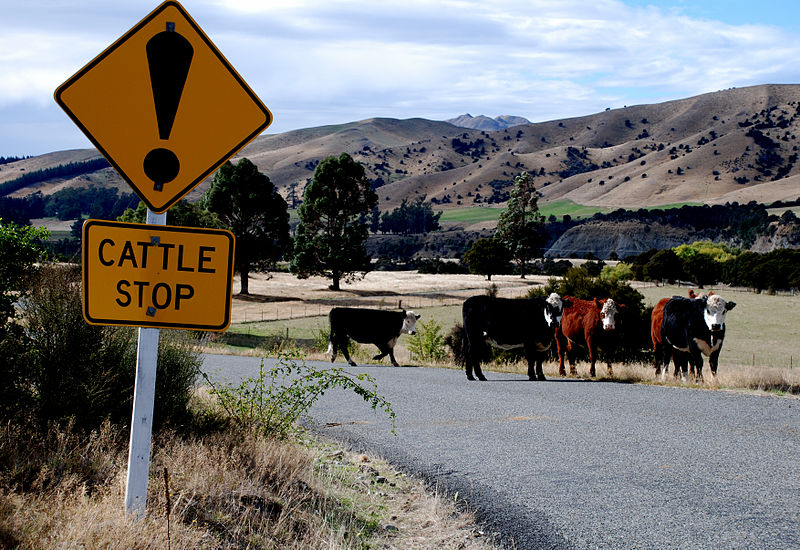 File:Cattle stop sign - New Zealand.jpg