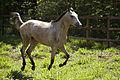 Cavalo correndo.jpg