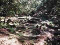 Celtiberian ruins.JPG