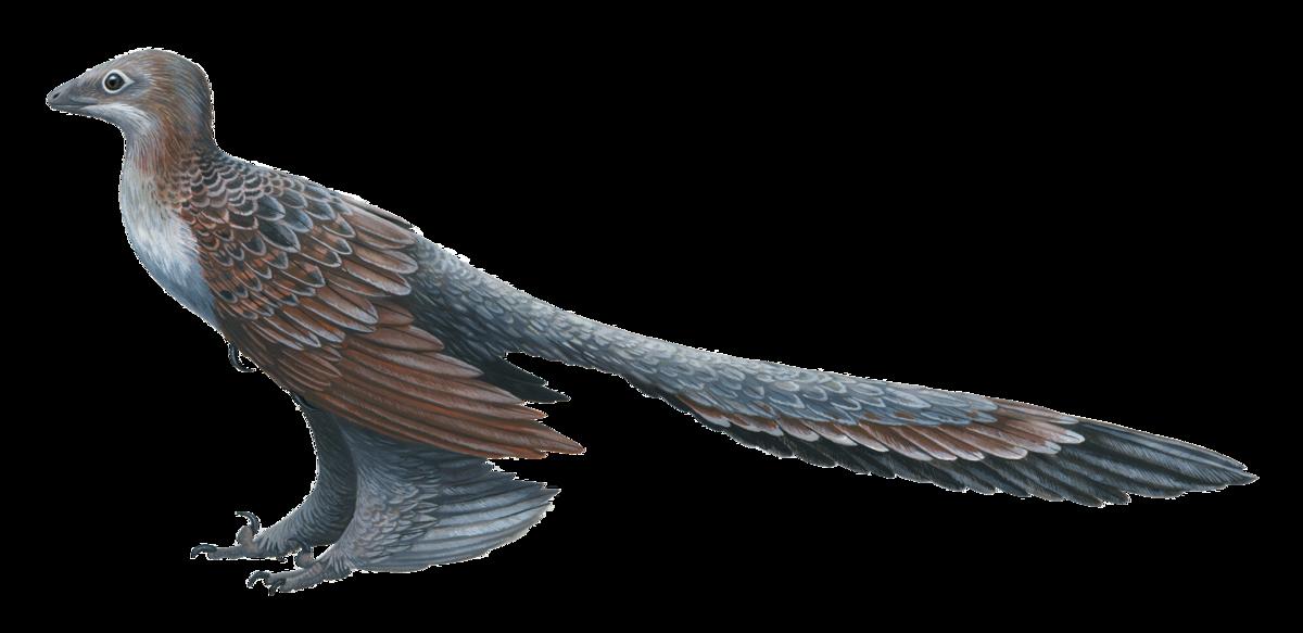 Fossil software  Wikipedia