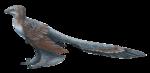 Changyuraptor.png
