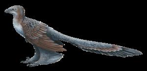Microraptoria - Image: Changyuraptor