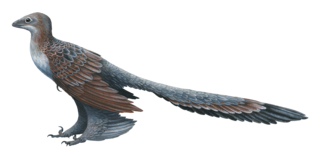 <i>Changyuraptor</i> genus of four-winged Asian dinosaurs