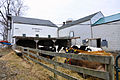 Chasehold Farm Creamery Cows.jpg