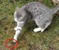 Chat jouant avec une souris 2.png