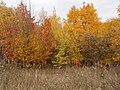 Cherkas'kyi district, Cherkas'ka oblast, Ukraine - panoramio (355).jpg