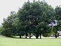 Chiltern Park Estate, Berkhamsted - geograph.org.uk - 1457009.jpg