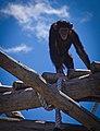 Chimp (01).jpg