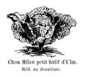 Chou Milan petit hâtif d'Ulm Vilmorin-Andrieux 1904.png