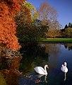 """Cincinnati - Spring Grove Cemetery & Arboretum """"Swans in Autumn"""" (4143676536).jpg"""