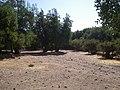 Cipreses (Tricahues). - panoramio (2).jpg