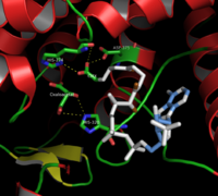 Citrate synthase2.png
