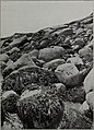 Clare Island survey (1911) (20032073524).jpg