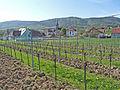 Cleebourg-Vignoble (4).jpg