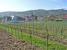Le village et son vignoble.