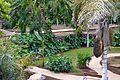 Colección Palmetum de Santa Cruz de Tenerife 13.JPG