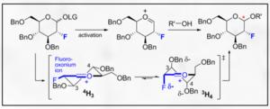 Glycosidic bond - Control of Oxonium ion – Felkin-Ahn stereoselectivity