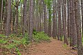 Cranesville Swamp Pine Trail - HDR (20137675852).jpg