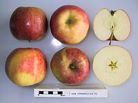 Cross section of New Jonagold (LA 17), National Fruit Collection (acc. 1983-081).jpg