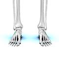 Cuboid bone 01.png