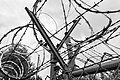 Dülmen, Kirchspiel, ehem. Sondermunitionslager Visbeck, Zaun -- 2020 -- 2444 (bw).jpg