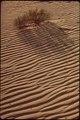 DUNE IN MONAHANS SANDHILLS STATE PARK - NARA - 545855.tif