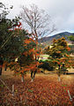 Daihakone Country Club, Kanagawa – Japan (4122541252).jpg