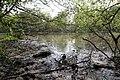 Darlands Lake - geograph.org.uk - 2370562.jpg