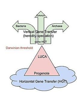 Darwinian threshold