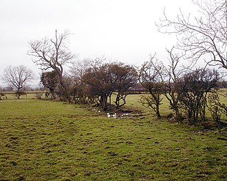 Enclosure - Decaying hedges mark the lines of the straight field boundaries created by the 1768 Parliamentary Act of Enclosure of Boldron Moor, County Durham.