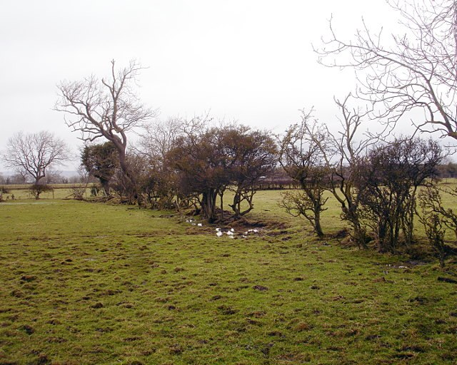 Decaying hedge - geograph.org.uk - 1715089
