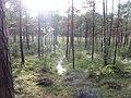Degučių sen., Lithuania - panoramio (171).jpg