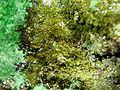 Demesmaekerite-Digenite-Guilleminite-rads-31a.jpg