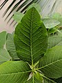Detailed view of a leaf.jpg