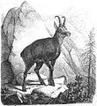 Die Gartenlaube (1859) b 257.jpg