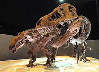 Dinosaur exhibit - Houston Museum of Natural Science - DSC01881.JPG