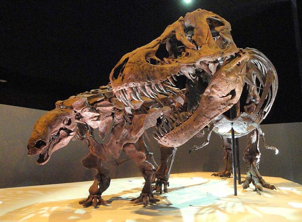 Dinosaur exhibit - Houston Museum of Natural Science - DSC01881
