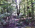 DoDo5 - panoramio.jpg