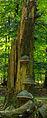 Dode boom. Locatie, Kroondomein Het Loo.jpg