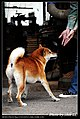 Dogs (5147888163).jpg