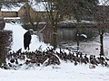 Don't forget to feed the birds this winter - geograph.org.uk - 1654425.jpg