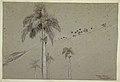 Drawing, Royal Palm, Cuba, 1885 (CH 18175481).jpg