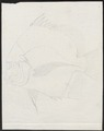 Drepane punctata - 1700-1880 - Print - Iconographia Zoologica - Special Collections University of Amsterdam - UBA01 IZ13100297.tif