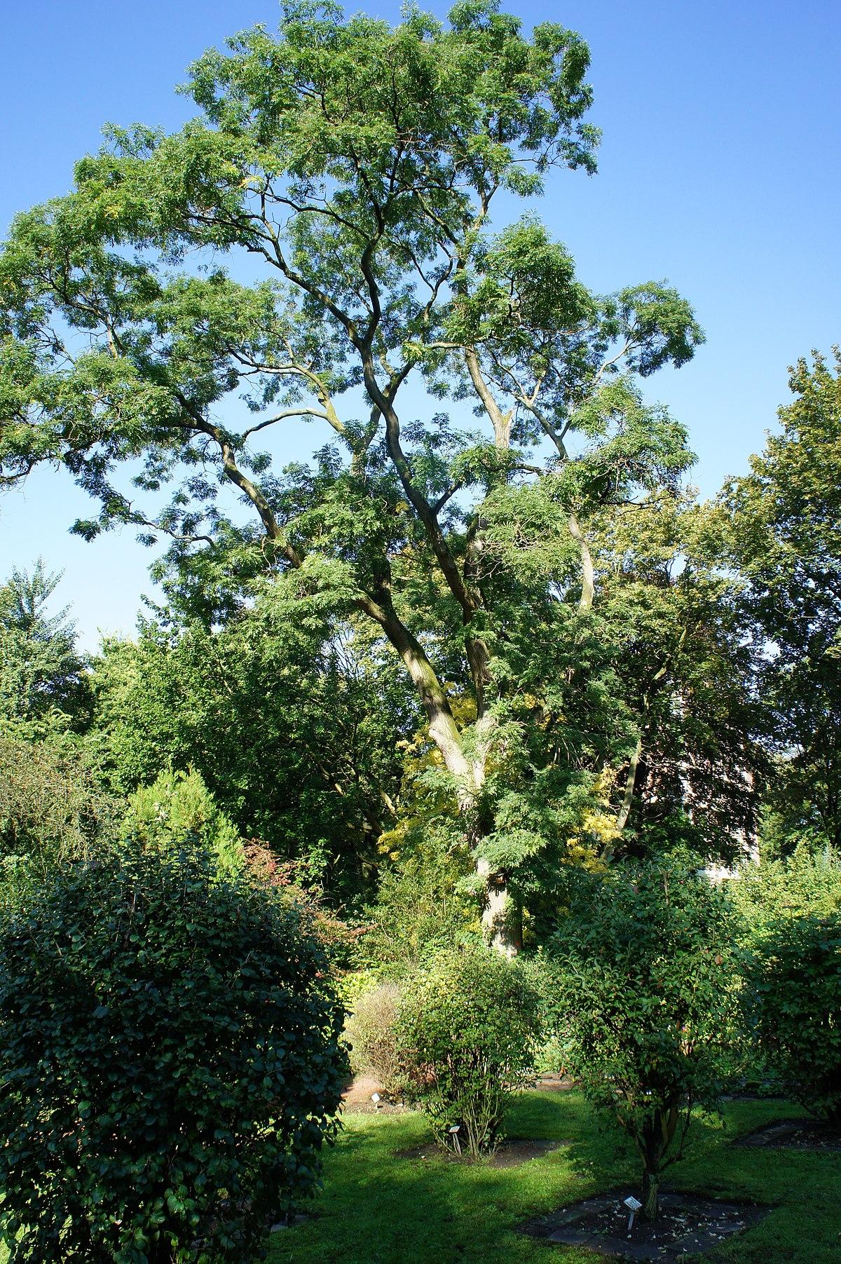Botanischer Garten Italien Gardasee: Botanischer Garten Kaiserberg
