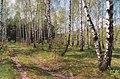 Durlesti Forest (1999). (25874282744).jpg