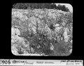 ETH-BIB-Opcina, Triest, Karst Karren-Dia 247-00906.tif