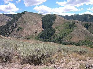 Aspect (geography) - Effects of aspect on vegetation can be clearly seen in this photo from Southwest Idaho near Anderson Ranch Reservoir. The north facing slopes receive more snow often because of prevailing winds and are shaded from direct sunlight during the winter, consequently they have more water available to support trees and forests, while the south facing slopes which receive more insolation is much hotter and dryer and supports only smaller more desert adapted woody plant species.North facing slopes here are dominated by a Pinus ponderosa, Pseudotsuga menziesii forest while the south facing slopes are mainly dominated by desert shrubs Artemisia tridentata and Purshia tridentata.