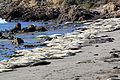 Elephant Seal Refuge (10528071494) (2).jpg