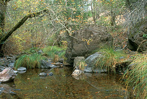 San Anselmo Creek - Elliott Preserve, San Anselmo Creek in Fairfax, CA, courtesy Charles Kennard, Friends of Corte Madera Creek